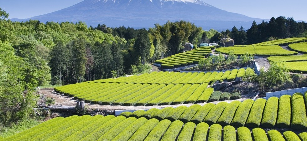 Japon: deals du jour - réserver un hôtel entre -5% et -30% - Japon -