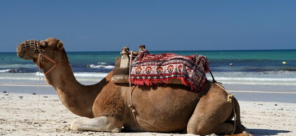 Hammamet: deals du jour - réserver un hôtel entre -5% et -30% - Hammamet -