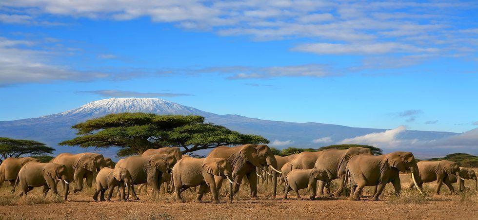 Tanzanie: séjours à l'hôtel jusqu'à -20% - Tanzanie -