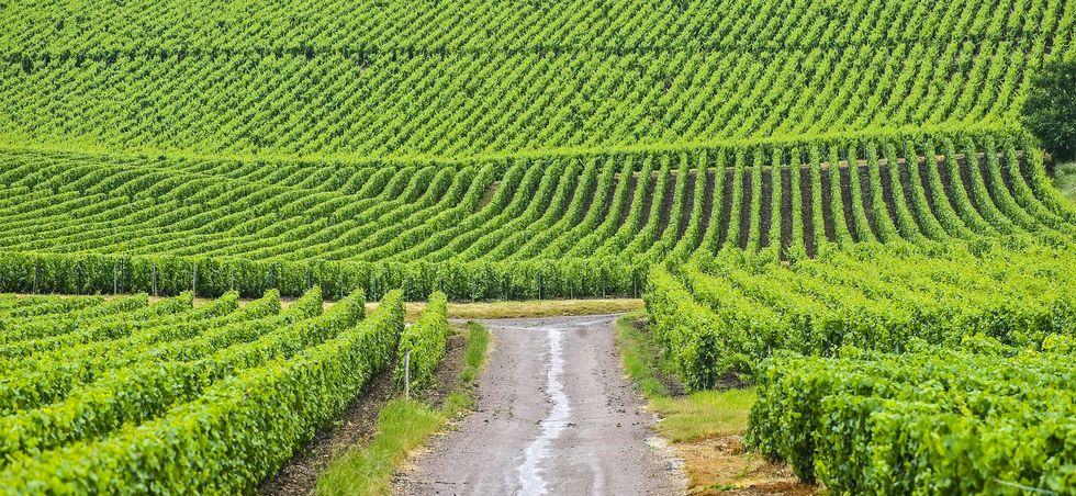 Activités, loisirs et transports Champagne-Ardennes - Champagne-Ardennes -